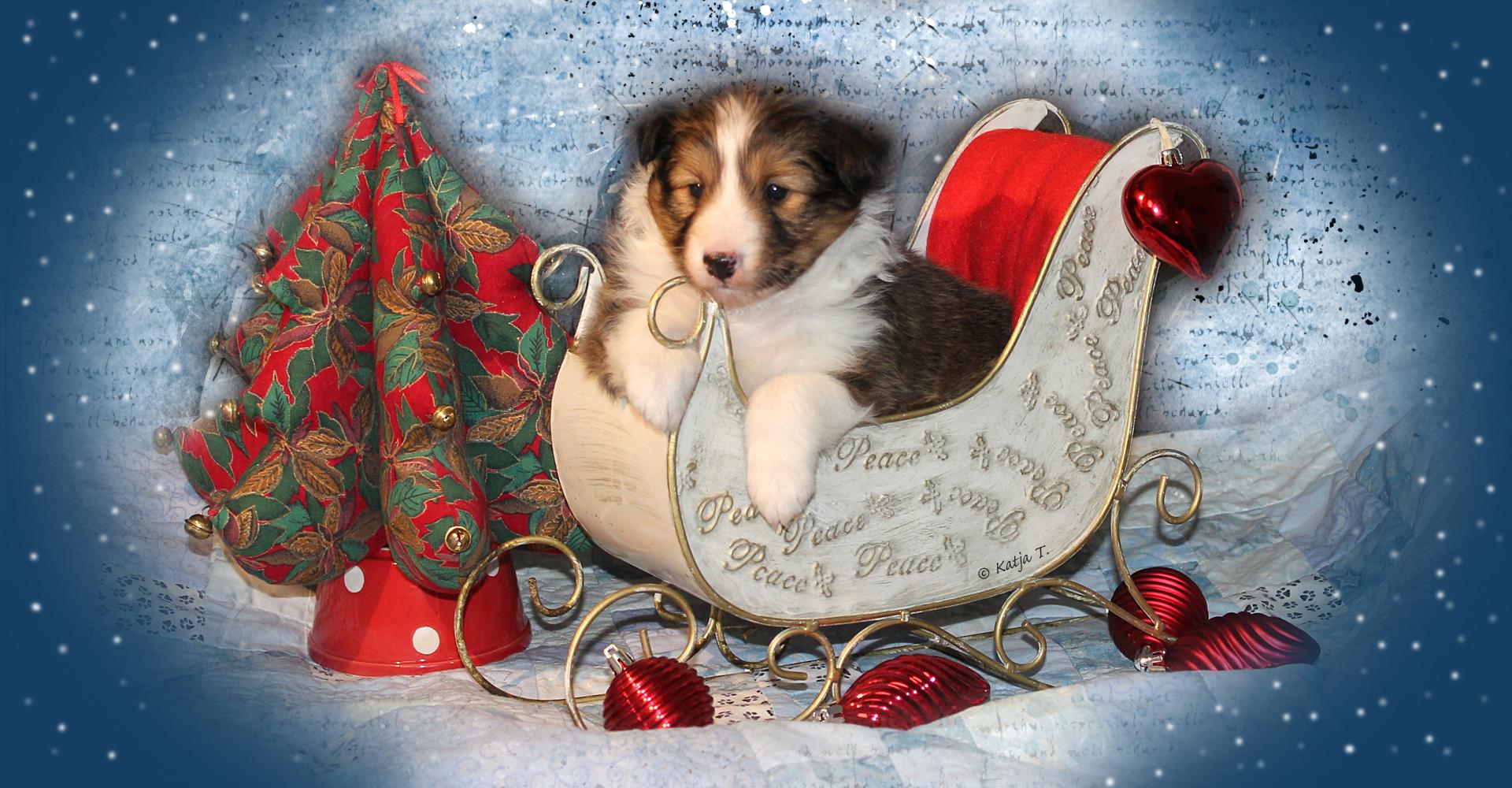 Hauskaa Joulua!