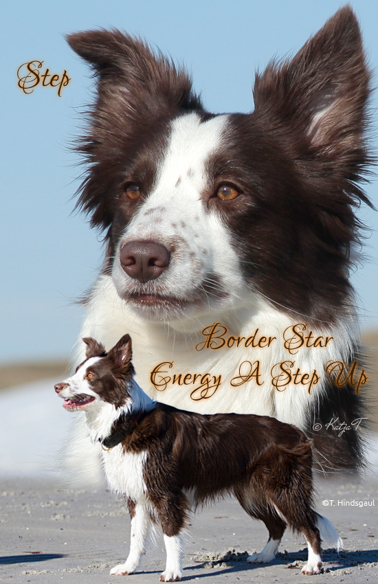 Border Star Energy A Step Up